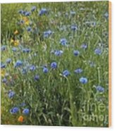 Bachelor's Meadow Wood Print