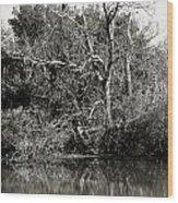 Back Bay Wildlife Refuge Wood Print