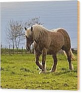Back Light Horse Wood Print