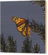 Back Lit Monarch Wood Print