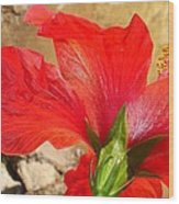 Back Of A Red Hibiscus Flower Against Stone Wood Print