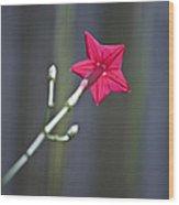 Back Of Flower Wood Print