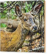 Back-tail Doe Wood Print