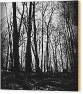 Backdunes In April Wood Print