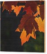 Backlit Autumn Maple Leaves Wood Print