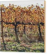 Backlit Autumn Vineyard Wood Print