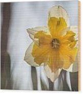 Backlit Beauty Wood Print