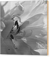 Backlit Black And White Tulip Wood Print