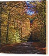 Backlit Canopy Wood Print