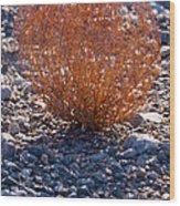 Backlit Color Wood Print