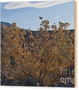 Backlit Desert Foliage Wood Print