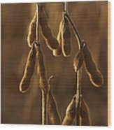 Backlit Edamame In Pennsylvania Field Wood Print by Anna Lisa Yoder