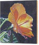 Backlit Hibiscus Wood Print