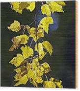 Backlit Leaves Of Autumn Wood Print