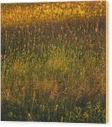 Backlit Meadow Grasses Wood Print