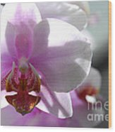 Backlit Orchid Wood Print
