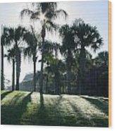 Backlit Palms Wood Print