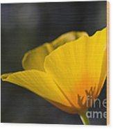Backlit Poppy Wood Print