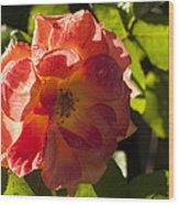 Backlit  Rose Wood Print