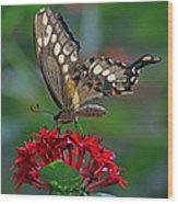 Backlit Swallowtail Wood Print