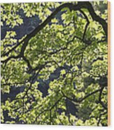 Backlit Tree Wood Print
