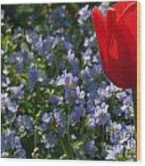 Backlit Tulip And Jacob's Ladder Wood Print