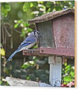 Backyard Bird Feeder Wood Print
