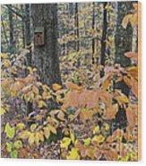 Backyard Birdhouse Wood Print
