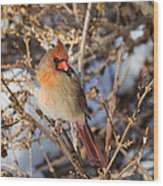 Backyard Birds Female Nothern Cardinal Square Wood Print
