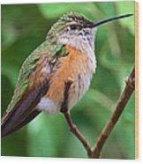 Backyard Broad Tailed Hummingbird Wood Print