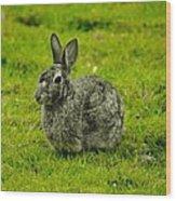 Backyard Bunny In Black White And Green Wood Print