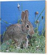 Backyard Bunny Wood Print