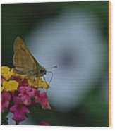 Backyard Butterfly Wood Print