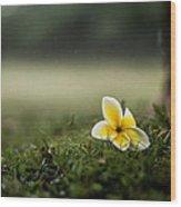 Backyard Flower Wood Print by Jason Bartimus