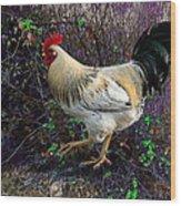 Backyard Rooster Wood Print