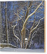 Backyard Trees Wood Print