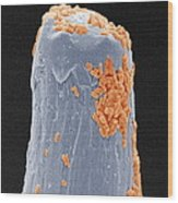 Bacteria On A Pin, Sem Wood Print by Power And Syred
