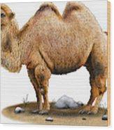 Bactrian Camel Wood Print