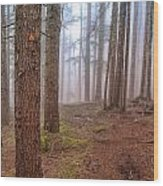 Baden Powell Trail Marker Wood Print