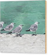 Bahama Birds Wood Print