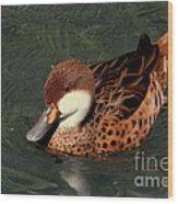Bahama Pintail Duck Wood Print