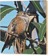 Bahama Woodstar Hummingbird Wood Print
