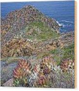 Baja California Coast Wood Print
