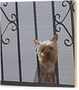 Balcony Dog Wood Print