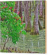 Bald Cypress And Red Buckeye Tree At Mile 122 Of Natchez Trace Parkway-mississippi Wood Print