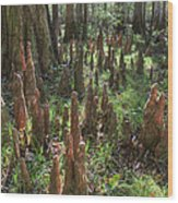 Bald Cypress Knees In Congaree National Park Wood Print