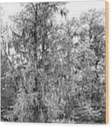 Bald Cypress Swamp In Black And White Wood Print