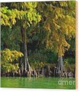 Bald Cypress Trees 1 - Digital Effect Wood Print