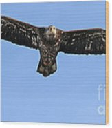 Bald Eagle 1238 Wood Print