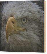 Bald Eagle 26 Wood Print
